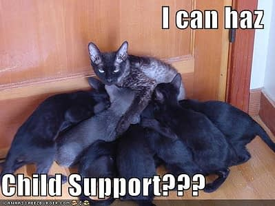 funny-pictures-child-support-cat.jpg
